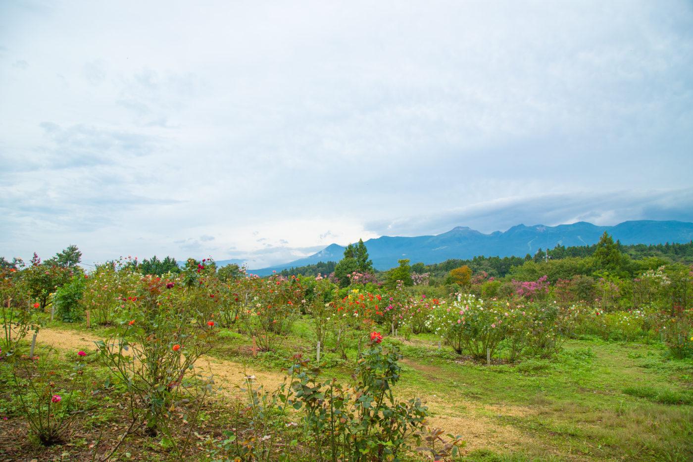 那須岳と那須フラワーワールドの様子