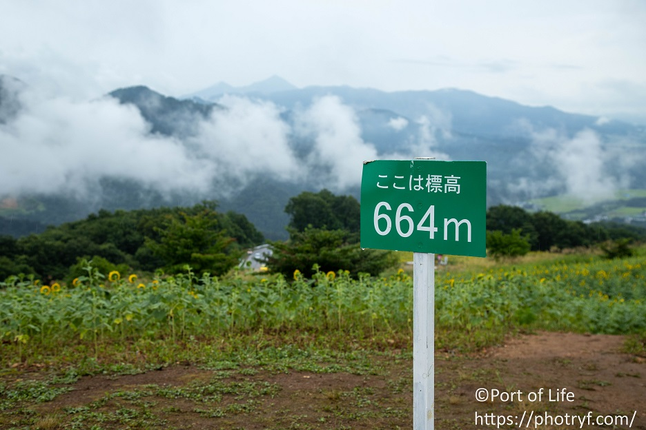 福島県喜多方市の三ノ倉高原ひまわり畑の標高664m