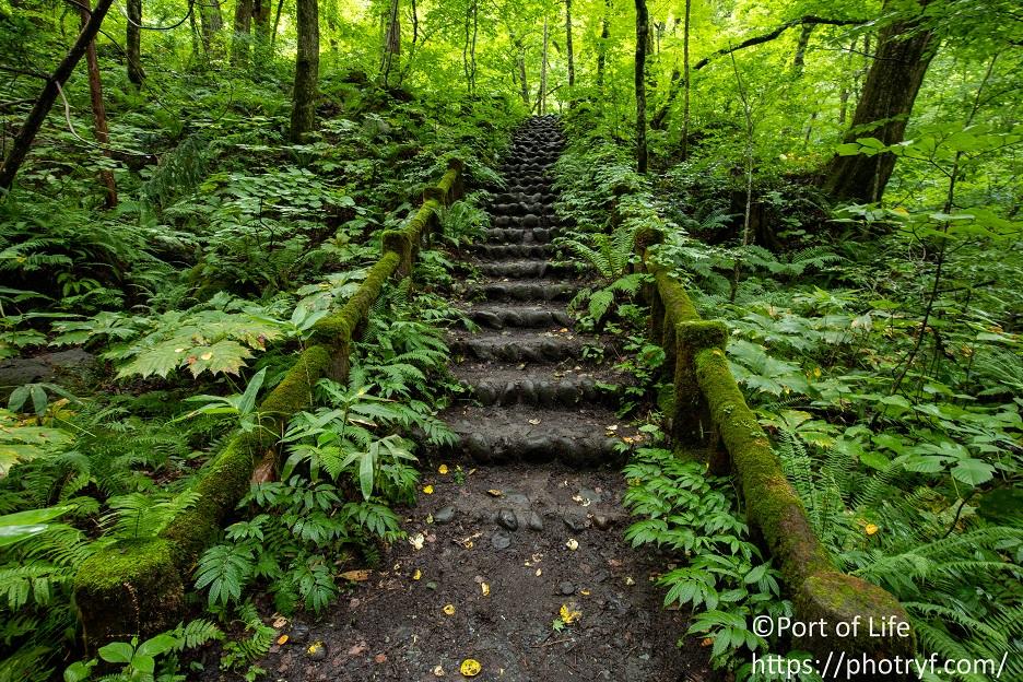 奥入瀬渓流のハイキングコースにある階段の写真