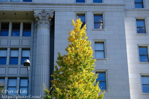 X-S10で撮影した銀杏の木