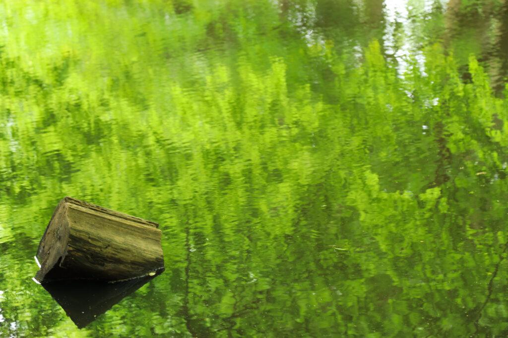 新緑と自然風景の写真