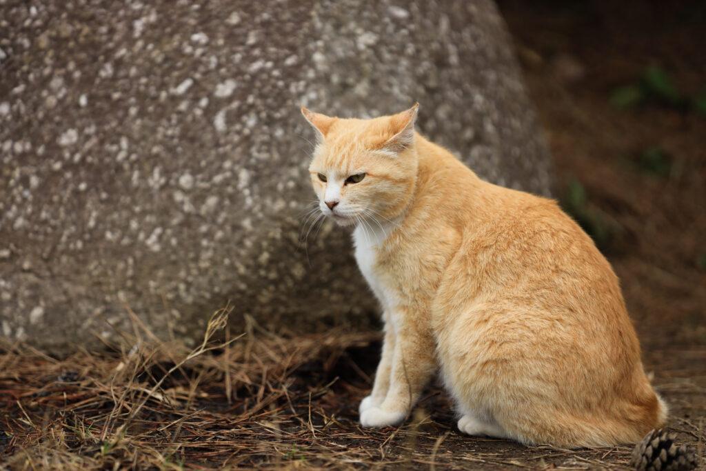 EOS Rで撮影した野良猫の写真