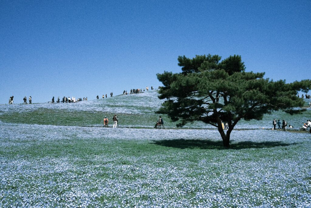 X100Vで撮影した国営ひたち海浜公園の写真